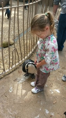 Longleat: Walk with Penguins