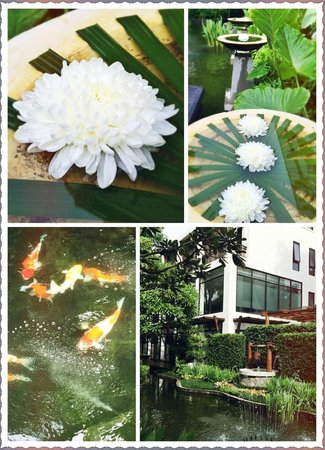 RarinJinda Wellness Spa Resort : Hotel environment