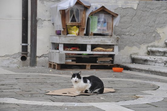 알 바일로 디 베네치아 사진