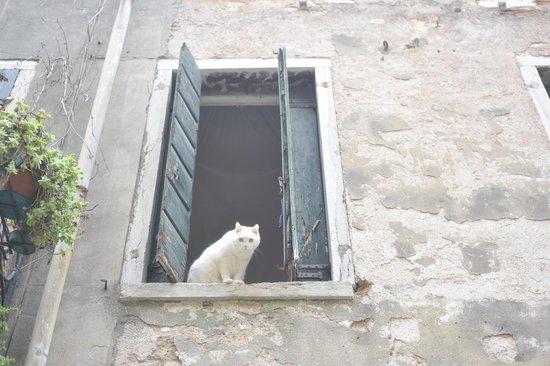 Al Bailo di Venezia: Окно ближайшего номера