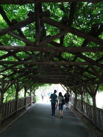 Central Park: Belas passagens