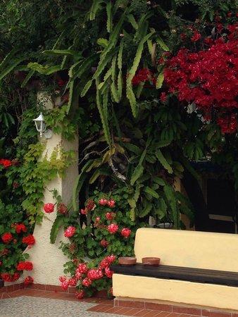 Apollon Hotel : Omgivningar med de vackra blommorna.