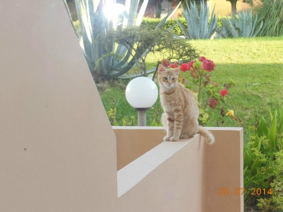 Sabina Hotel : утром нас встречали котики