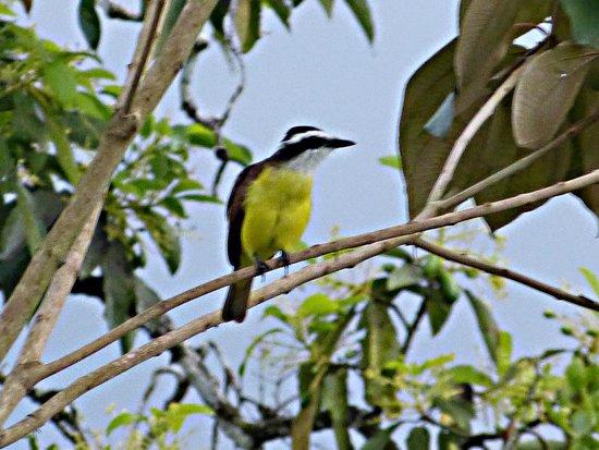 Casa Luna Hotel & Spa : oiseau du jardin de l'hotel