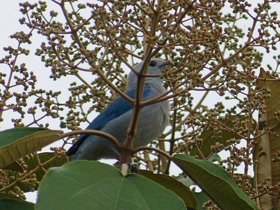 Casa Luna Hotel & Spa: bel oiseau du jardin