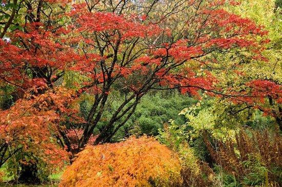 The Inn at Irish Hollow: Autumn Blaze in the Hollow