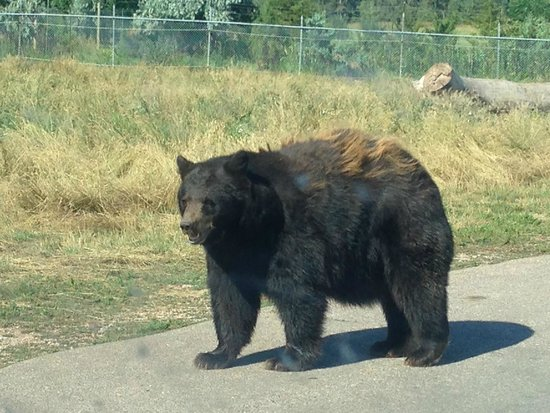 Bear Country USA: 1