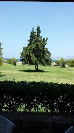 Mitsis Ramira Beach Hotel : The grounds