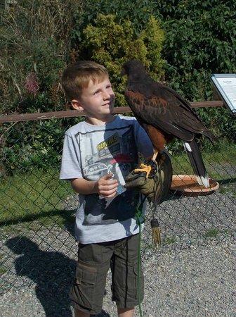 Rathwood : Birds of prey