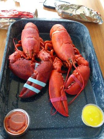 Trenton Bridge Lobster Pound: Hard shell on left, soft shell on right.