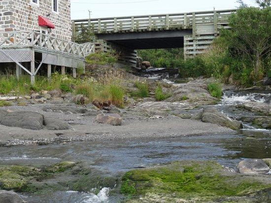 Moulin Banal du Ruisseau a la Loutre: Le torrent à côté