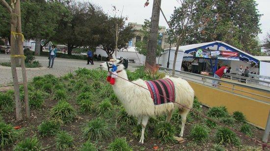Parque Quinta Normal : LHAMA