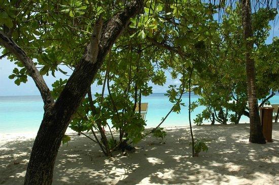 VOI Maayafushi Resort: from room