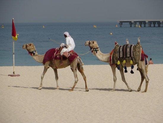 The Ritz-Carlton, Dubai: A camel ride on the beach