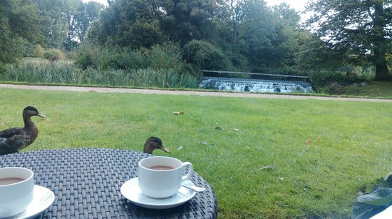 Champneys Henlow: View from the room  (46)