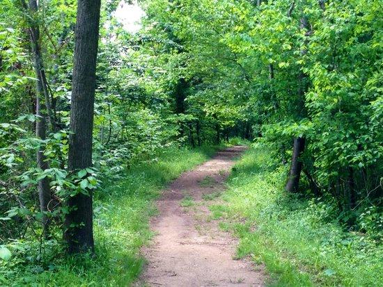 Theodore Roosevelt Island Park: Nice trail