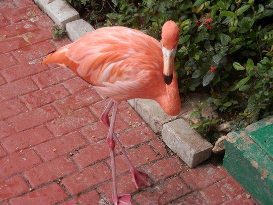 Iberostar Bavaro Suites: flamingo