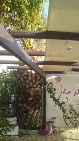 La Plaza: lp44