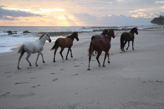 Playa Cielo: Beach again