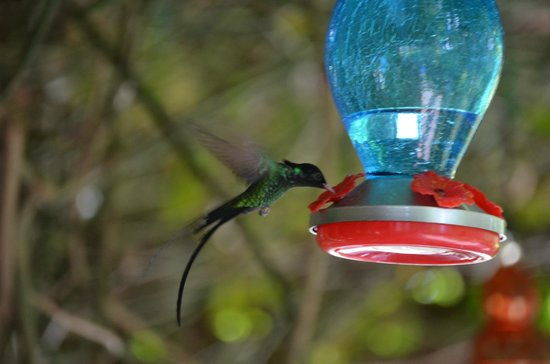 Rainforest Adventures Jamaica : Hummingbird in the garden...