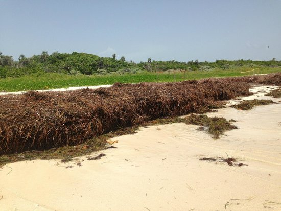Bahia Honda State Park Campgrounds: Seaweed central!