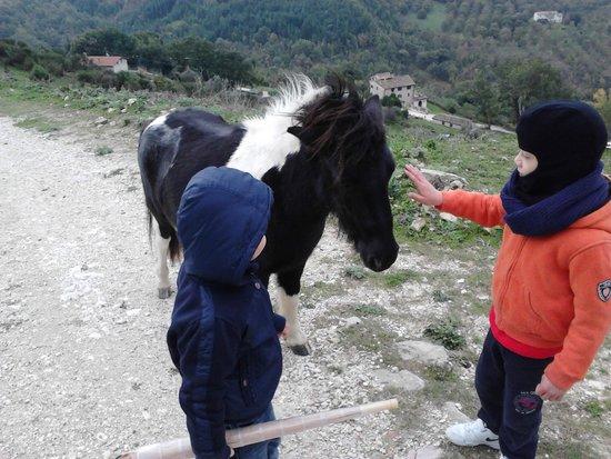Agriturismo Val di Boccio : il pony