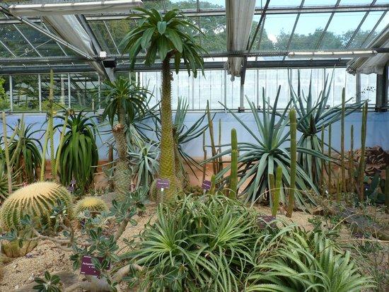 Le vallon picture of jardin du conservatoire botanique for Camping le jardin botanique limeray