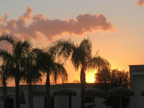 Ristoppia Resort : palme