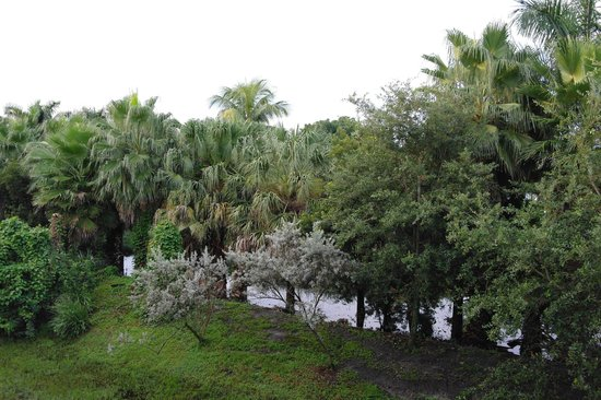 Provident Doral at The Blue Miami : Vista sul giardino