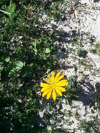 De Hoop Nature Reserve : Beauty even in the smallest