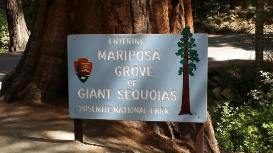 Mariposa Grove of Giant Sequoias: Grove sign