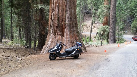 Mariposa Grove of Giant Sequoias: to see the size