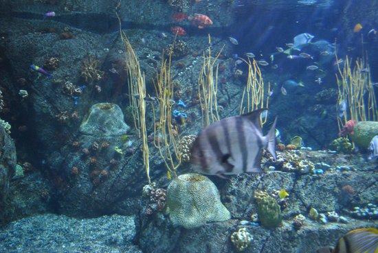 Aquarium Of The Pacific Aquário Do Pacífico