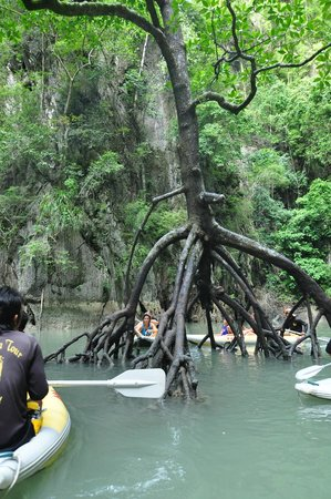 Two Sea Tour: Black mangrove found in the inner lagoon