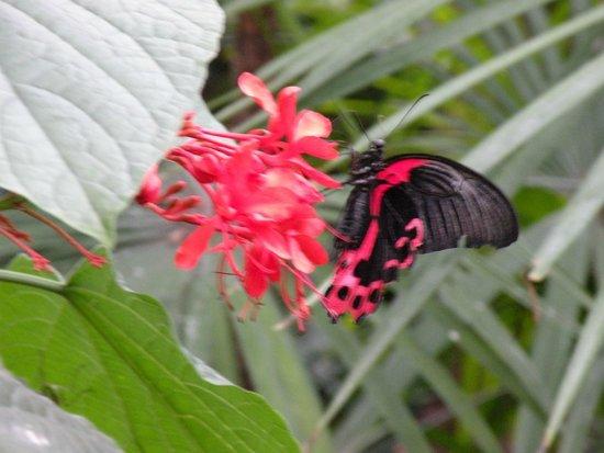Niagara Parks Butterfly Conservatory: Lots of butterflies