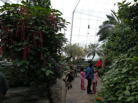 Niagara Parks Butterfly Conservatory: The interior