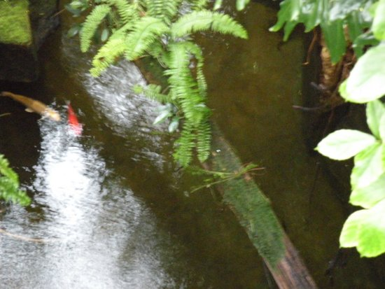 Niagara Parks Butterfly Conservatory: Love the water accents