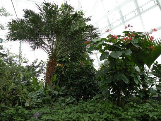 Niagara Parks Butterfly Conservatory: Vegetation