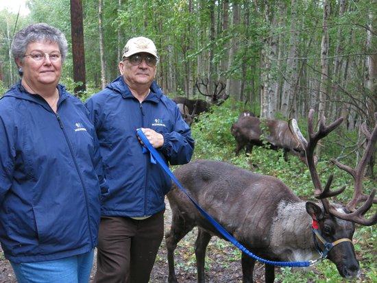 Running Reindeer Ranch: Walking with the reindeer