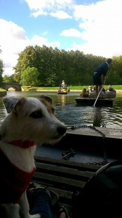 Scudamore's Punting Company: Poppy the jack russell punting with Scudamores
