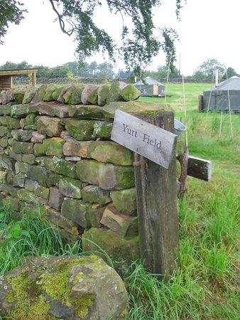 Bivouac at Druid's Temple: Yurt Field