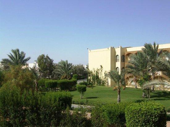 Desert Rose Resort: Вид из номера отеля