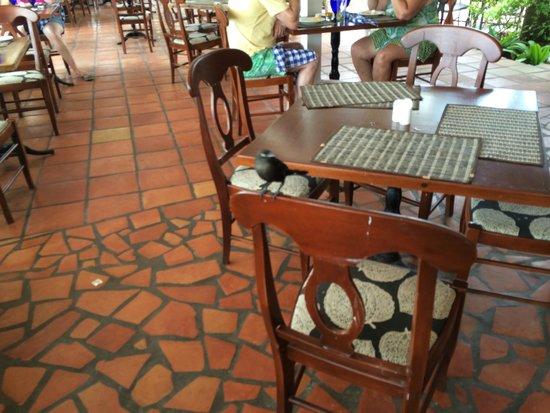 Pineapple Beach Club Antigua: the birds who like a drink