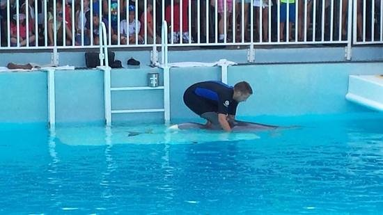 Clearwater Marine Aquarium: Winter getting ready to use his tail.