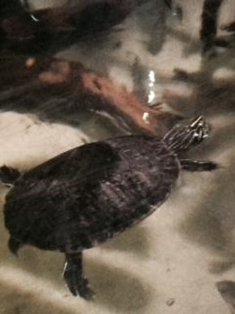 Blue Reef Aquarium: turtle