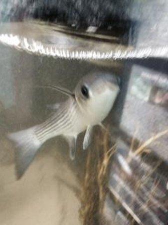 Blue Reef Aquarium: fish