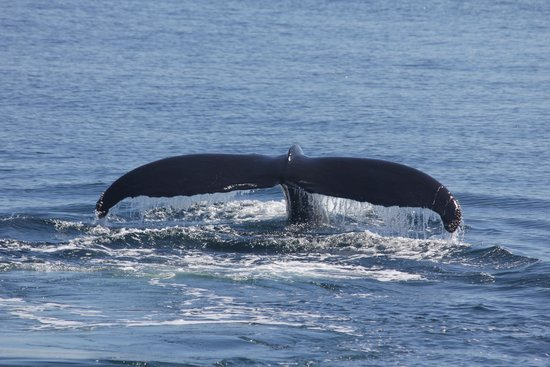 Hyannis Whale Watcher Cruises: A tail view