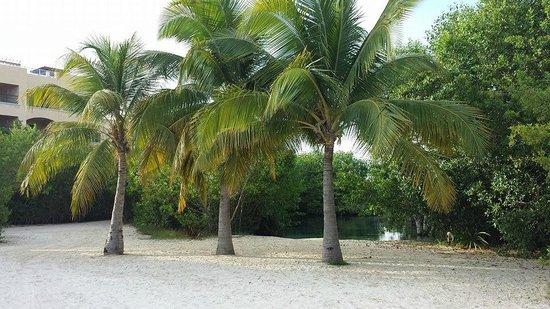 BlueBay Grand Esmeralda: Lagoon