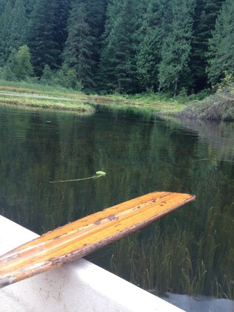 The Enchanted Forest: Peace and quiet on the pond
