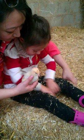 Bowland Wild Boar Park: chick & rabbit